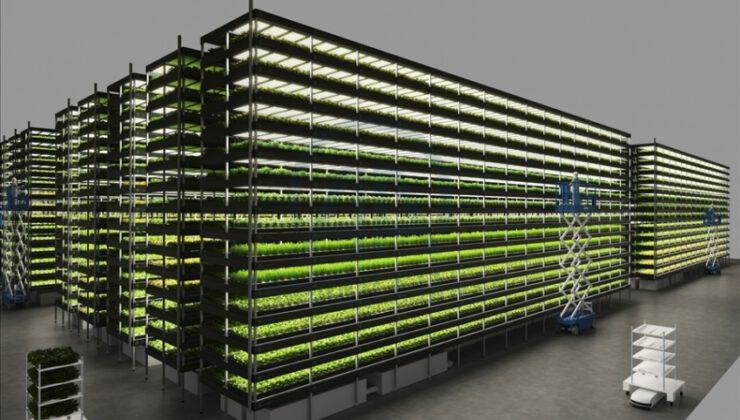 14 katlı, 'topraksız dikey tarım'