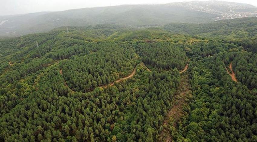 6 bin 500 hektar orman kül oldu