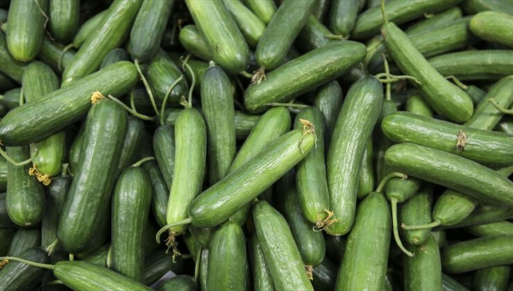 Ağustosta fiyatı en fazla artan ürün salatalık, en çok düşen erik