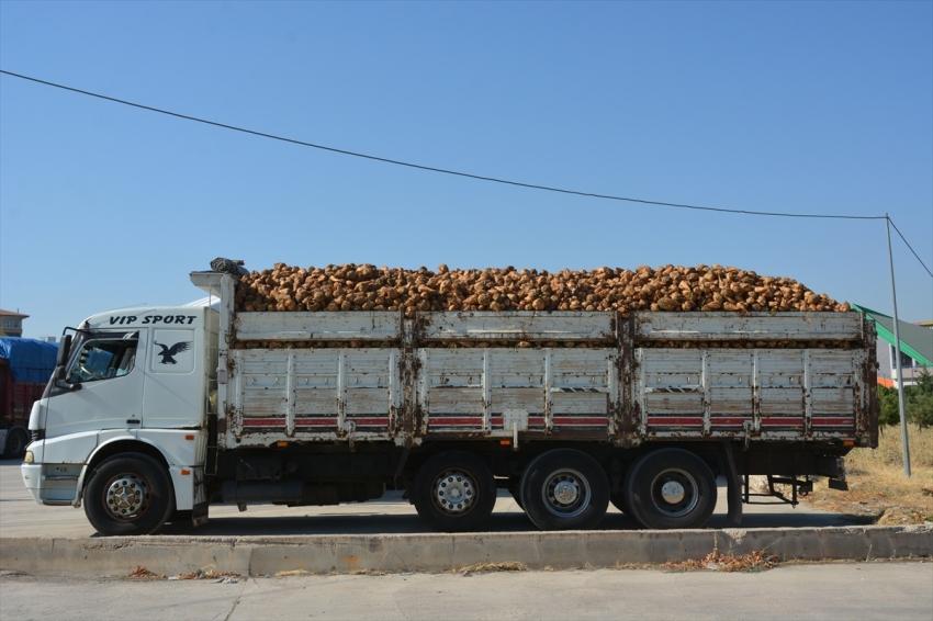 Türkşeker'de hedef 950 bin ton şeker üretimi