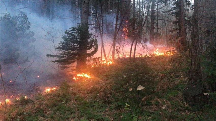 Uludağ'da orman yangını kontrol altına alındı
