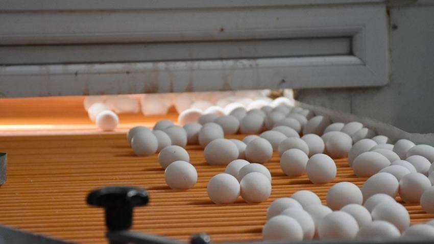 Yumurta üreticileri Afrika pazarı için lojistik desteği bekliyor
