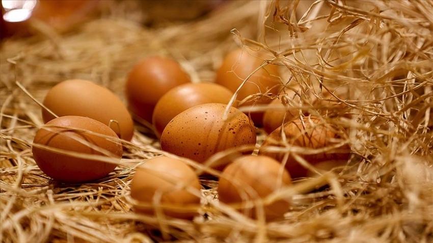 Yumurta üretimi ekimde arttı