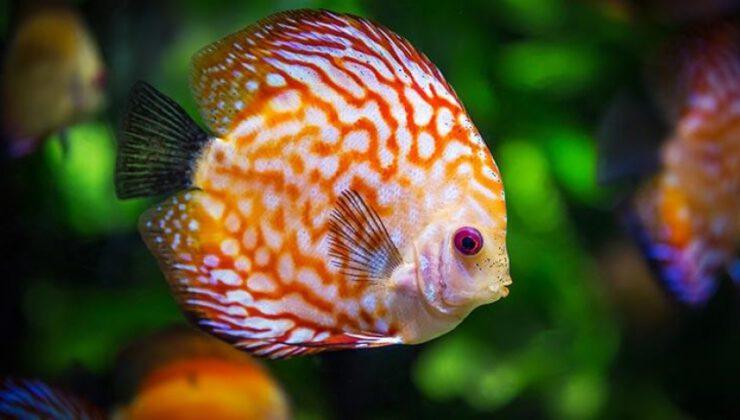 Bazı balık türleri tescil edildi
