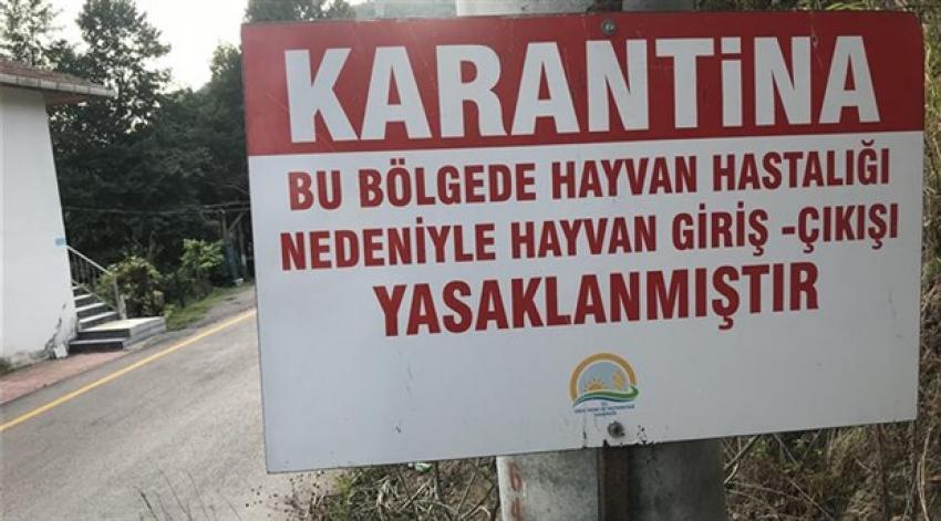 Bursa'da şap karantinası