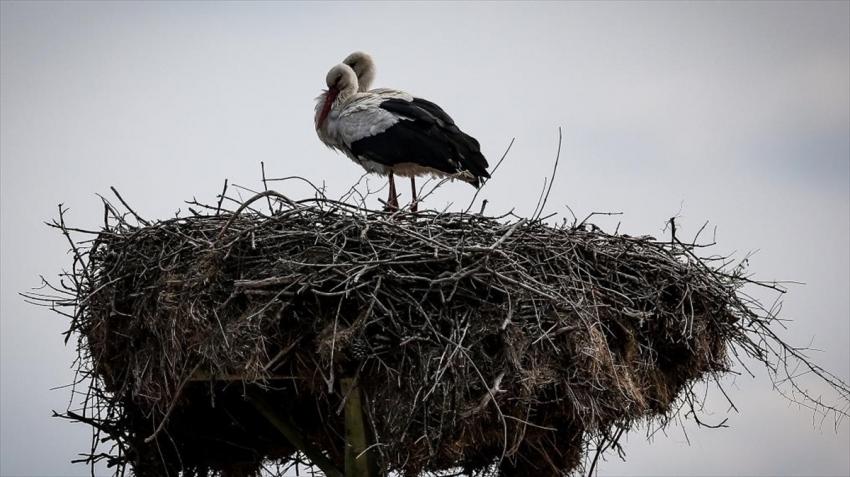 Bursa'nın 'Leylek Köyü' kuş cenneti olacak