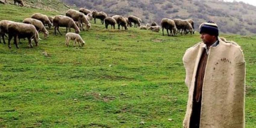 Çoban desteği ödemeleri başlıyor!