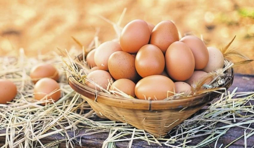Dünya Yumurta Günü
