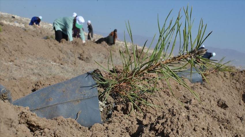 'Geleceğe Nefes' kampanyasıyla 83 milyon fidan toprakla buluşacak