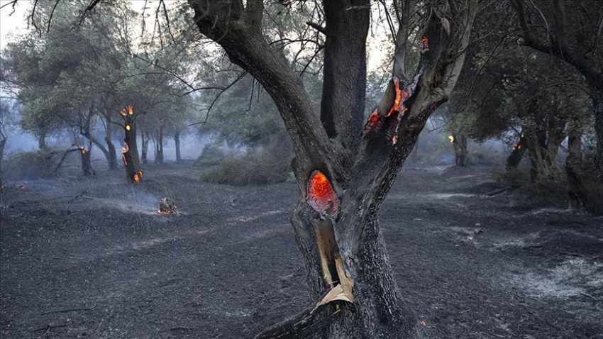 Gelibolu'daki yangın kontrol altına alındı