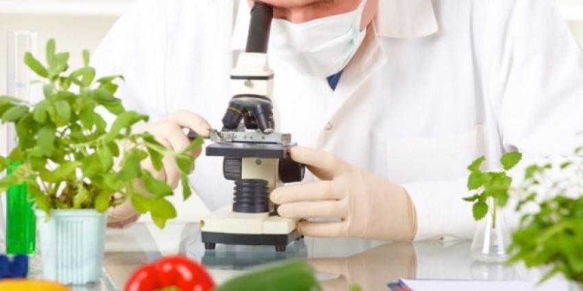"""Gıda işletmelerinde """"biyomühendis"""" istihdam edilebilecek"""