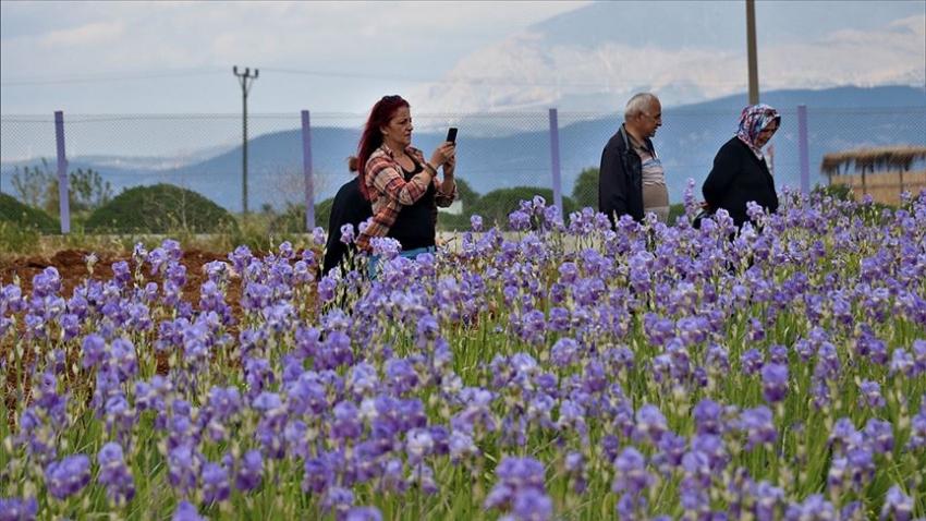 'Hasat turizmi'ne ilgi artıyor