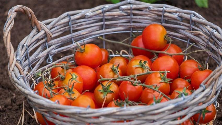 Kasım ayının zam şampiyonu domates