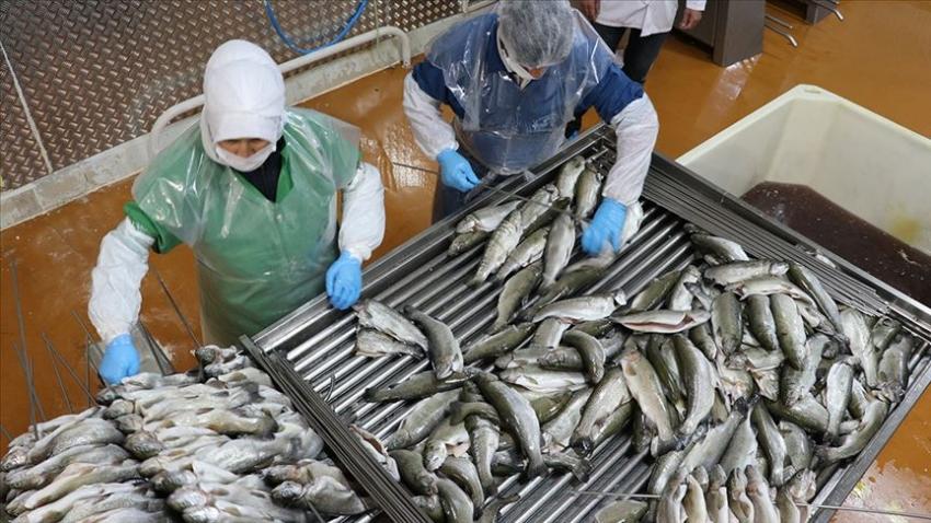 Su ürünleri ihracatından 918,5 milyon dolarlık gelir