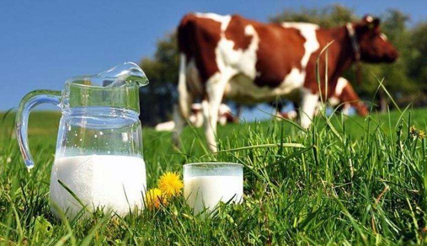 Süt üreticileri süt fiyatlarının yeniden düzenlenmesini istiyor