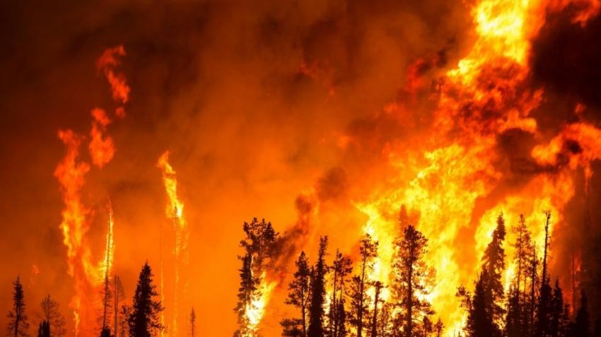 Orman yangınlarının yüzde 84'ünün sebebi…
