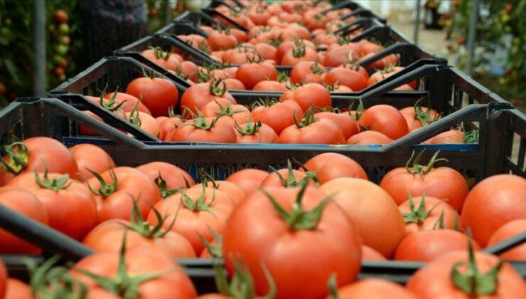 Rusya domates kotasını yükseltti